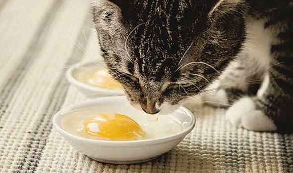 Makanan dan Minuman Terbaik untuk Kucing Kampung