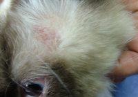 penyakit jamur pada anjing